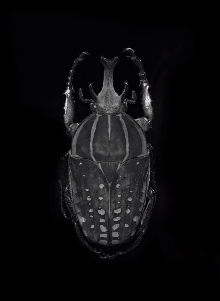 stefano-giuriati-scarabeo